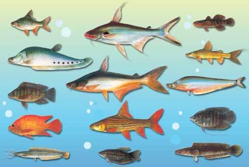 Fish The Kidney